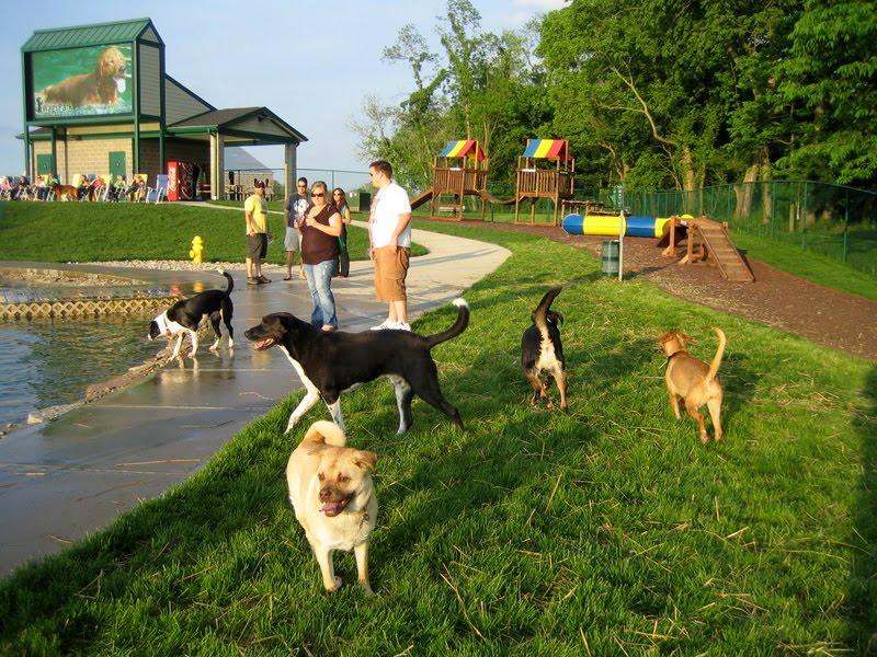 Indoor Dog Parks Cincinnati